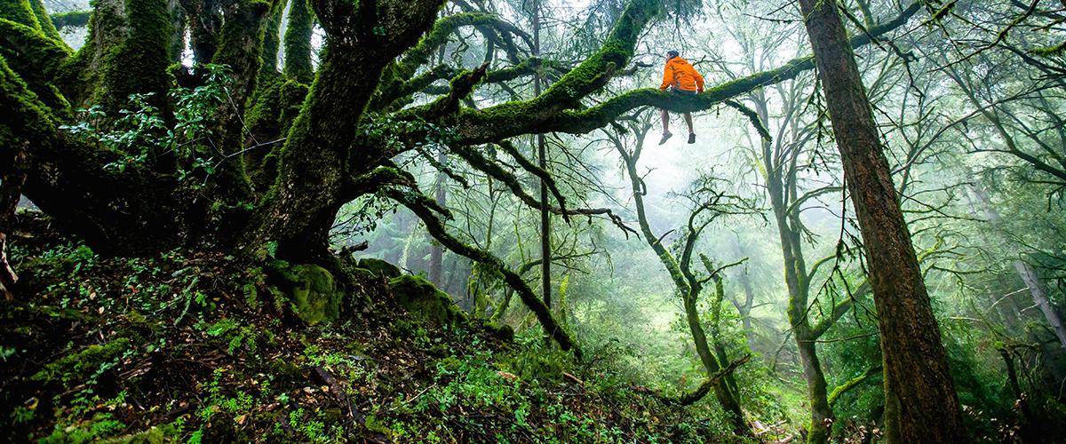 Elan et libre arbitre • Yoga Philo